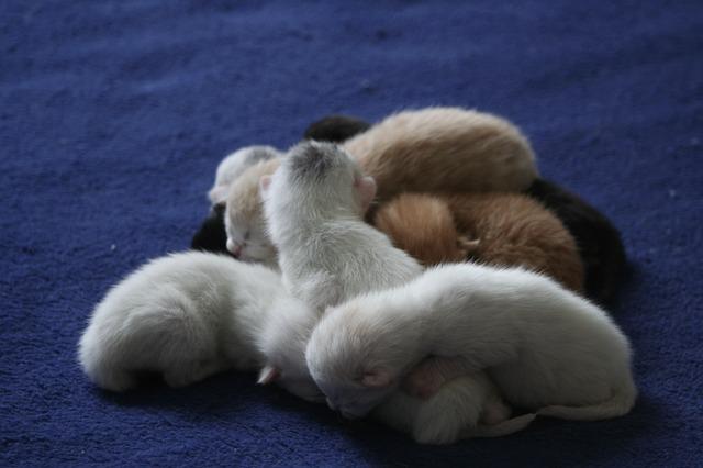 miminka kočičky