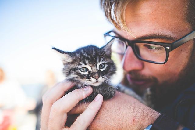 mourovaté koťátko