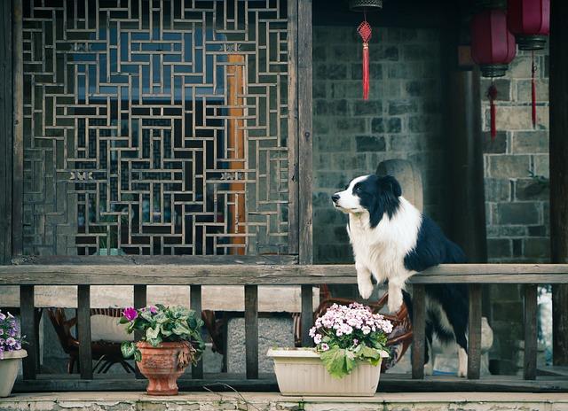 pes na terase