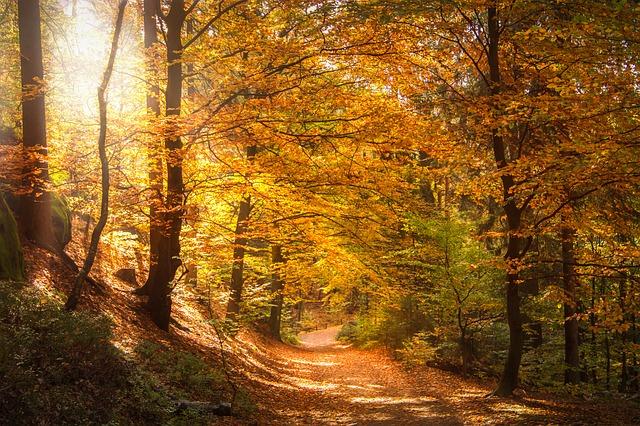 slunce v lese.jpg