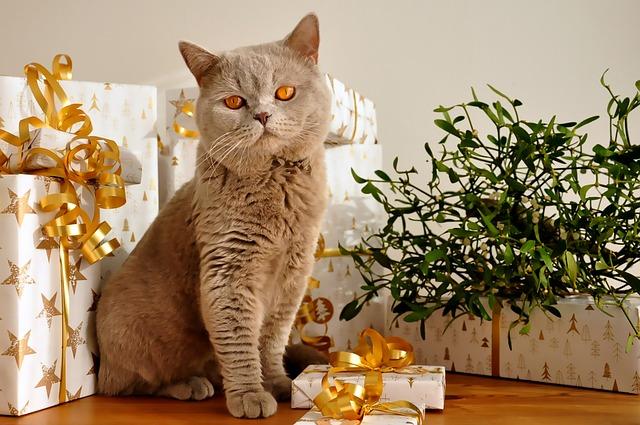 kočka u dárků